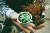 Plant Succulent