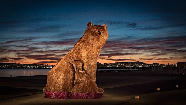 Photo of the week. Penny bear in Tahoe.