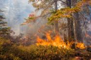 Wildfire image.