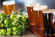 Beers next to hops