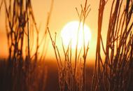Sun rising above a field