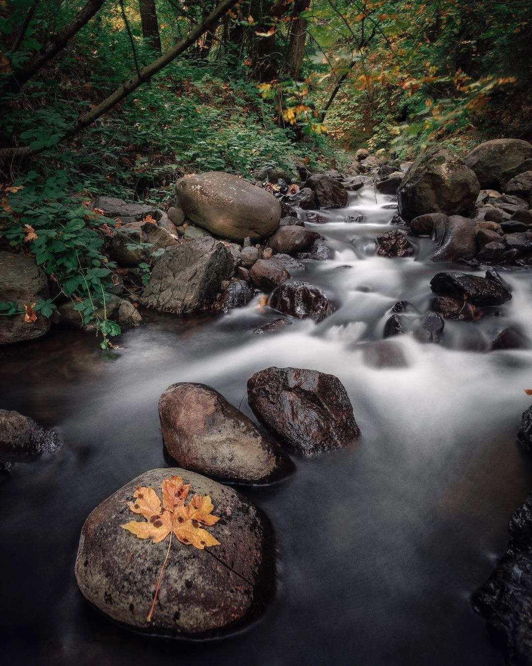 Photo of a stream in a forest.