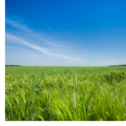 A clear blue sky above bright green grass.