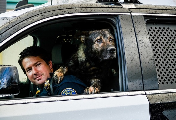 Officer and K9 in a rainy patrol car