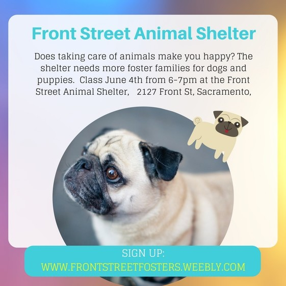 Dog Foster Poster