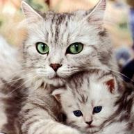 Kitten and Cat