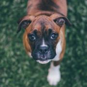 dog foster