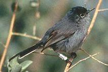 bbbbbbb, bird, bird, bird, bird is the word