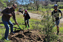 County Replanting Trees