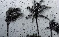 palm tree and rain