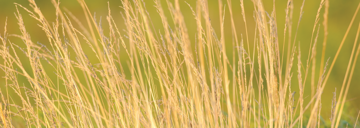 Close-up of weeds and tall grass in open field