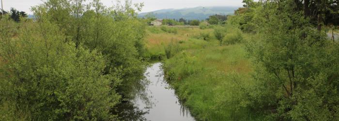 Colgan Creek