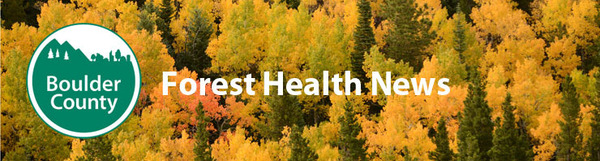 Forest Health News