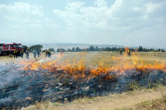 Firefighters in field
