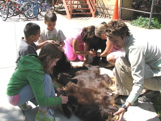 Volunteer Naturalist working with kids and talking about bears.