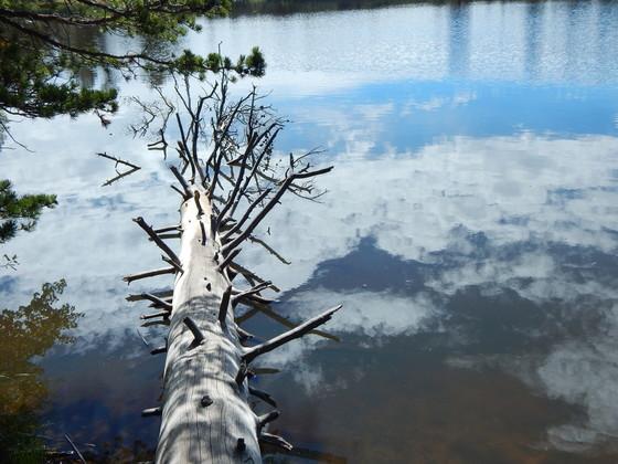 Artist photo of Mud Lake