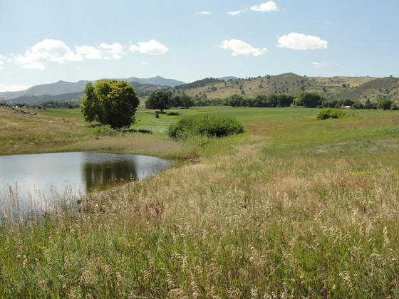 Loukonen Dairy Farm pond and field