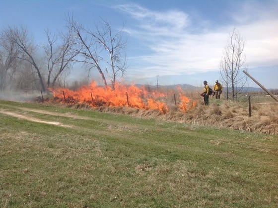 Agricultural ditch burn