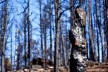 burned log