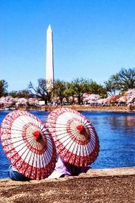 Cherry Blossom Festival