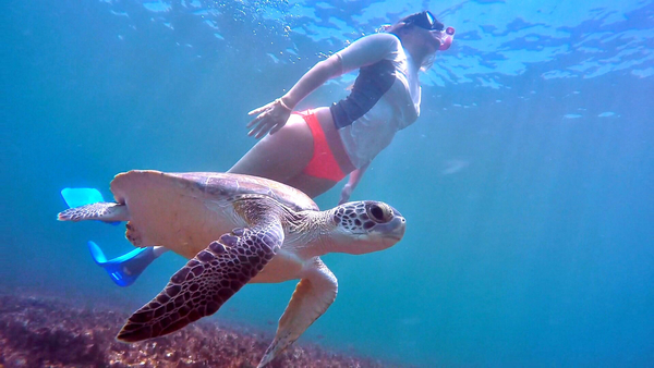 A woman swims past a green sea turtle