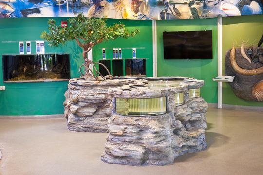 Marine life exhibit