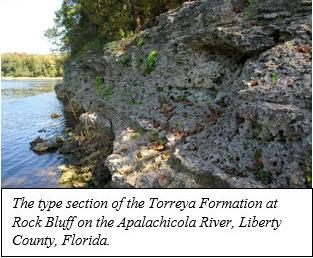 Torreya Formation