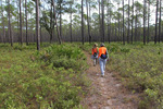Hikers on the Florida National Scenic Trail through the St. Marks National Wildlife Refuge, by Doug Alderson