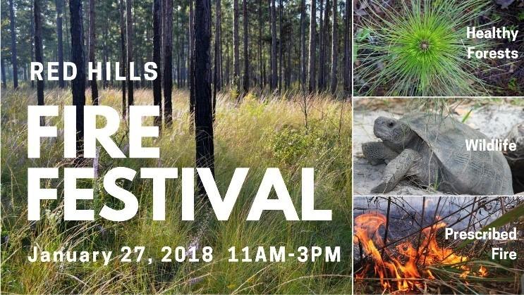 Fire Festival Graphic