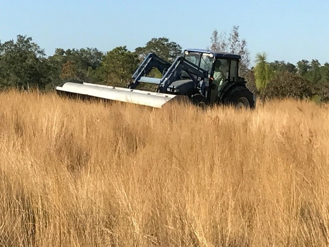 Harvesting Wiregrass