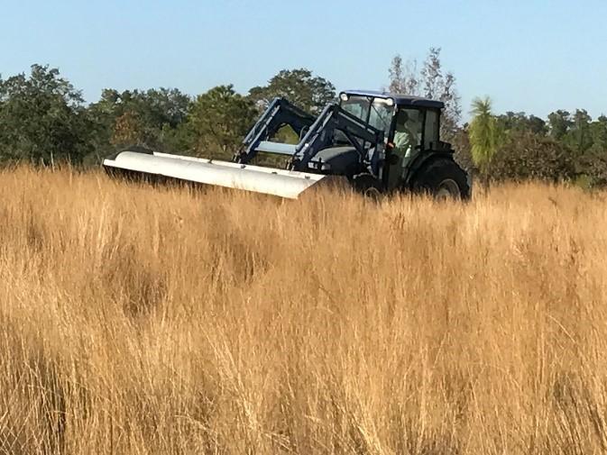 Harvesting Wiregrass
