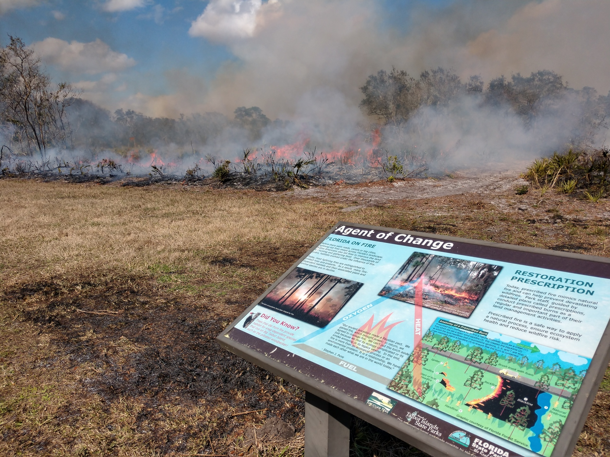 A picture of smoke and fire at a prescribed fire at Big Talbot Island State Park