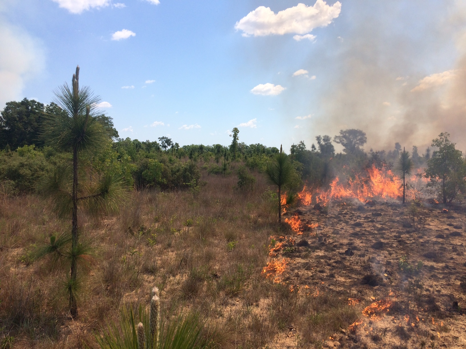 A Prescribed Fire at Torreya State Park