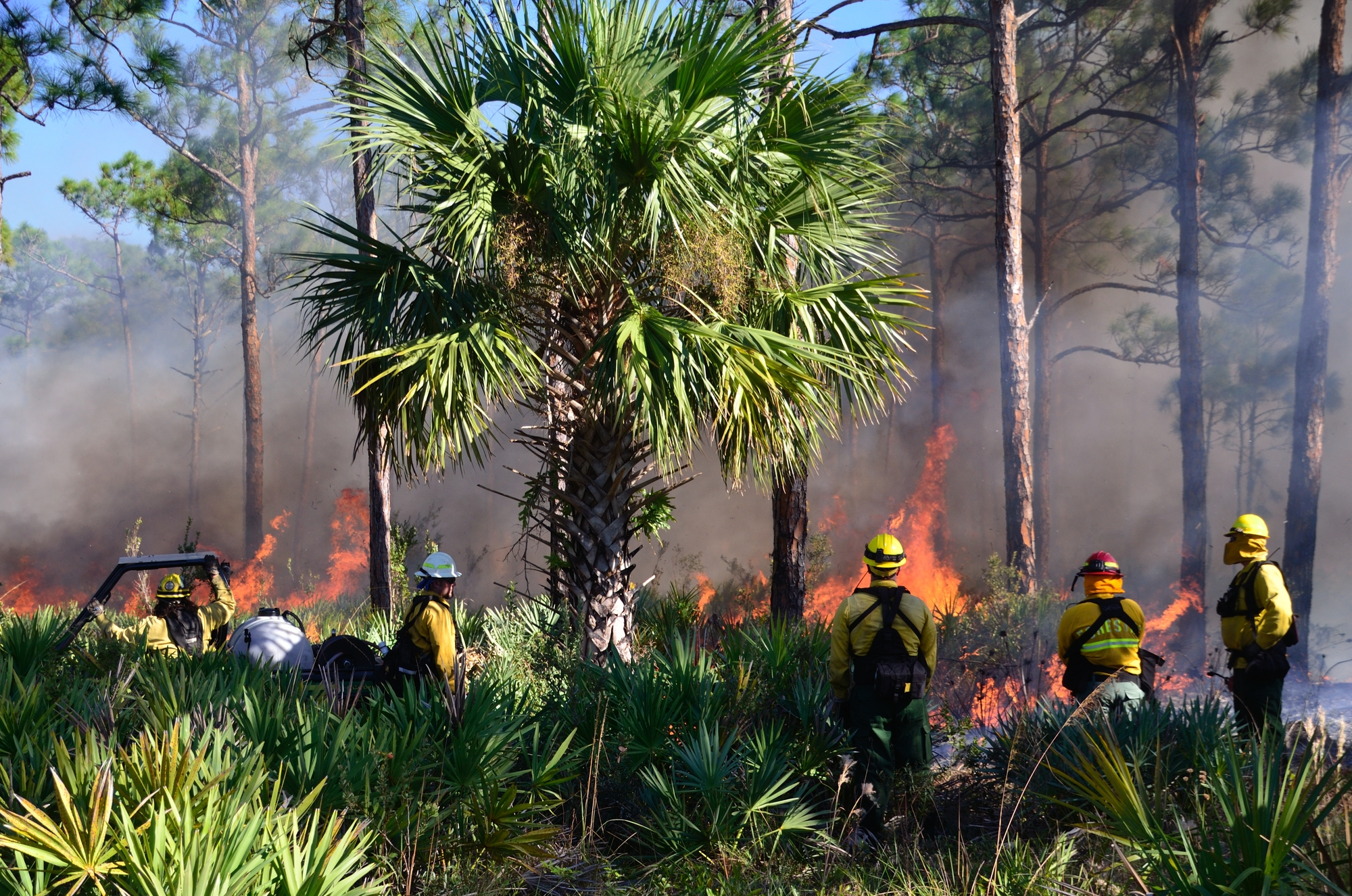 A Florida State Parks Fire Crew monitoring a Prescribed Fire at Jonathan Dickinson State Park