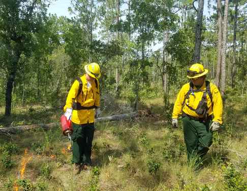 Parks Director Eric Draper Lights Prescribed Fire