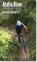 Mountain biker riding on trail.