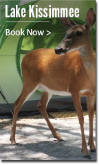 A small deer stands in front of a tent.