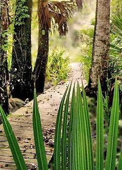 Bluffton Hiking Trail