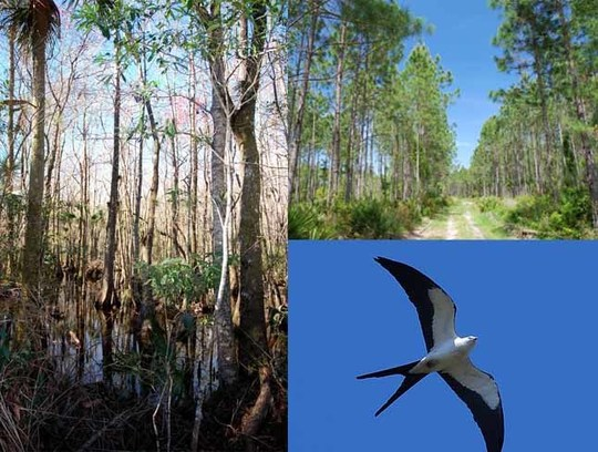 19,225-Acre Conservation Easement Added to Lower Suwannee National Refuge and Big Bend Coast