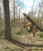 Torreya State Park nature trail entrance post hurricane by Doug Alderson