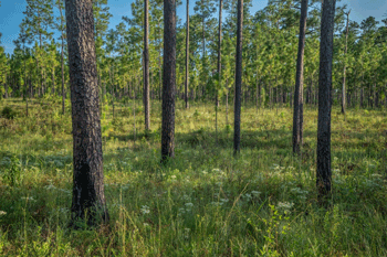 DEP Acquires a 2,115-Acre Forest Tract in Santa Rosa County