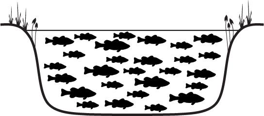 Lake full of bass
