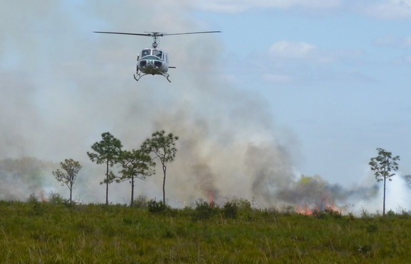 Picture: A helicopter is used to conduct prescribed burning