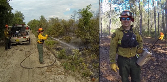 Picture: Team members of the Florida Forest Service Prescribed Fire Team conduct a burn