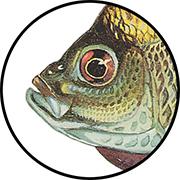 Sunfish mouth