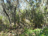 Overgrown Flatwoods