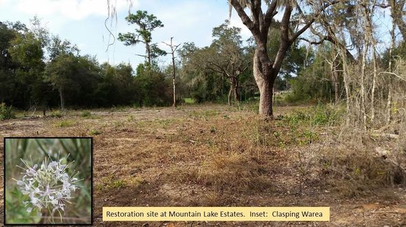 Mountain Lake Estates Restoration Area