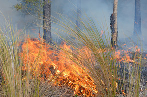 Prescribed fire at Andrews Wildlife Management Area