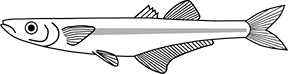 Brook silverside