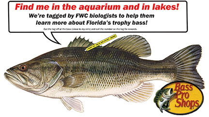 Trophy bass tagging